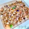 貝殻の聖地!?と言われているオゴクダ浜に行ってきました!
