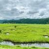 加田喜沼湿原の池塘(秋田県由利本荘)