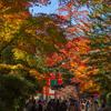 紅葉が見頃のピークを迎える高野山に行ってきました。