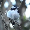 虫や鳥の名前の識別に役立つ生物分類の知識。分類階級と活用方法を紹介