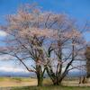 今年訪れた富山の桜マップ【2019版】