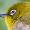 🦜野鳥捜索隊【131】安定のMF上野森林公園🆕81ミヤマホオジロ~ルリビタキなど(2/24)