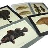 アンティーク・プリント「マダガスカルの魚類」展示のお知らせ