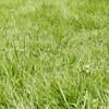 【太陽光発電】間もなく始まる、雑草との戦い