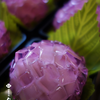 『上生菓子から・・・ 紫陽花』