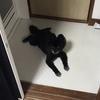 愛犬の行動を観察していると、家の中の快適な場所がわかった