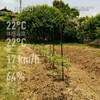 芝生菜園化作戦3