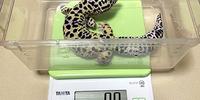 5月の体重測定:ユキ