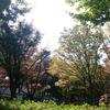都立城北公園のドックランへ行ってきました!