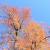 光輝く ハンノキ湿地の森