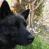 甲斐犬愛護会展覧会春の本部展へ行きたいッの巻〜さーさんハ⁉️∑(゚Д゚)❓