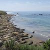 【カリフォルニア】数千頭の野生ゾウアザラシに会える海岸に行こう!