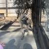 """【2019年2月】さいたま市にある""""大宮公園小動物園""""に行ってきました【ハイエナ、ツキノワグマ】"""