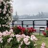 <ぶらり旅>雨のヴェルニー公園へ(横須賀) ~横須賀港を望むバラの名所