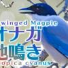 オナガの鳴き声【野鳥図鑑・鳴き声図鑑】Cyanopica cyanus Azure-winged magpie