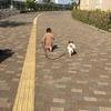 松山中央公園(坊っちゃんスタジアム)ウォーキング
