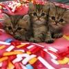 BEST OF CAT's!!どの子がお好みですか!?