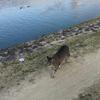 にゃん、にゃん、にゃん! ー猫のお散歩ー