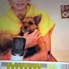 倖田來未さんの愛犬と似すぎな愛犬