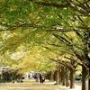 昭和記念公園の紅葉その1と、小鳥たち。