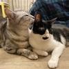 【2021年1月のまとめ】カービィに神社に猫【購入品】