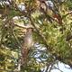 アカゲラとヒレンジャクと春の草花