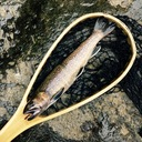 テンカラライフ:テンカラ入門、渓流釣り初心者がゼロから一尾釣れるまで。