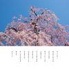 春空を 歌う桜の 春の詠み歌