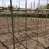 宇宙芋栽培の棚作りは強風対策が重要です