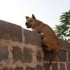 追い詰められた犬は塀を飛ぶ、じゃあ人は?
