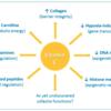 ビタミンCと免疫についてのレビュー