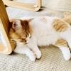 【猫学】猫一匹で可哀想?一匹飼いと多頭飼いのどちらがいいのか検討してみた。