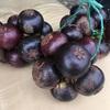 マンゴスチンの季節到来 果物の女王をラウンド中に食す グヌングリスCC