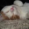 猫の結膜炎と、格闘する点眼