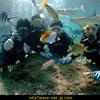 Discover scuba diving!