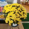 軽専門店お店前のお花