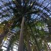 寒さを忘れて南国気分?熱帯植物園見学!