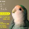 3月「インコのおとちゃん」展 in 堺 北花田阪急