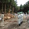 林業作業現場の見学②