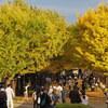 E-M1 昭和記念公園(4) カナールのイチョウ並木