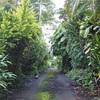 常夏まっさおマウイ島