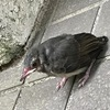 学内で小鳥さん発見(*´∀`*)