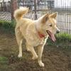 釧路の迷い犬は返還されました