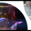 中央道 ※ドックラン 東京都~神奈川~山梨県~長野県~岐阜県~愛知県