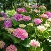花の写真でフォトブック「PhotoJewel S」(15cmスクエア)を作ってみた。