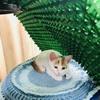 子猫・てんてんちゃん、保護者を探しています。