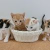 猫の社会化期は9週齢まで!?子猫を飼うときに知っておきたい大事なこと!
