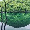 【青森の旅】美しき奥入瀬渓流に会いに行こう♬