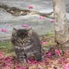 【写真館】カメラ目線にキュン(*˘︶˘*).。.:*♡ 癒やされます(猫編)