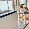 空気清浄機好きの愛猫と、猫好きの空気清浄機?